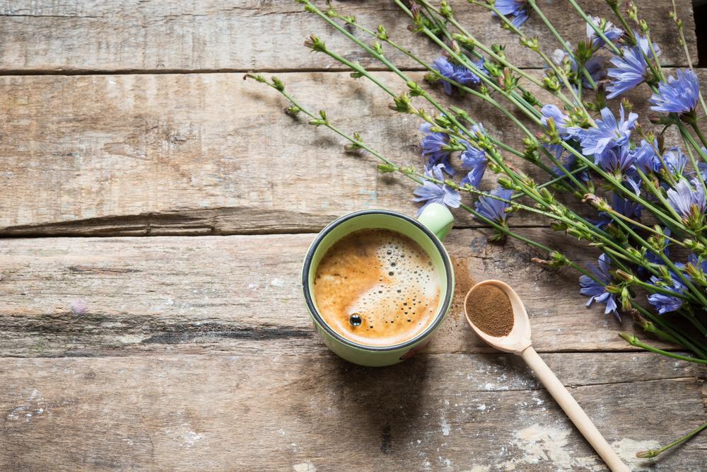 achicoria utiliza café alternativo