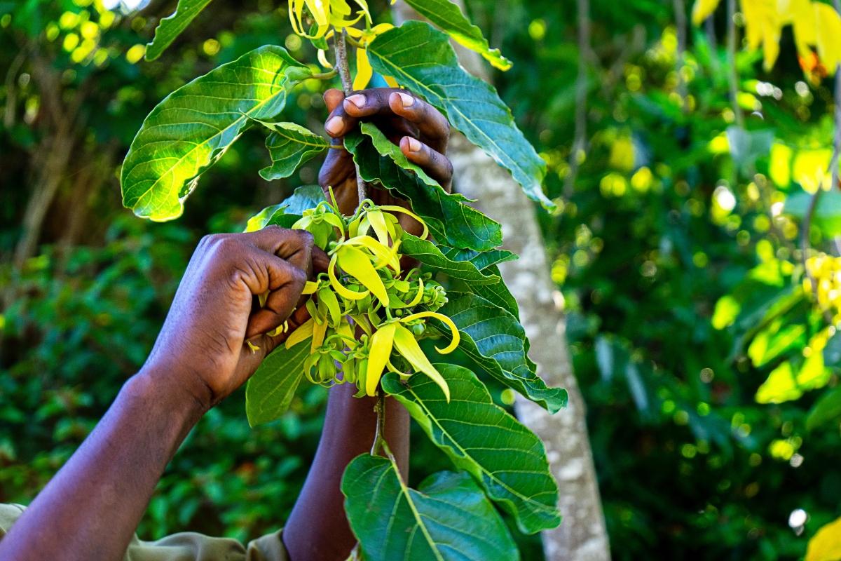 pimienta negra: el camino de las especias