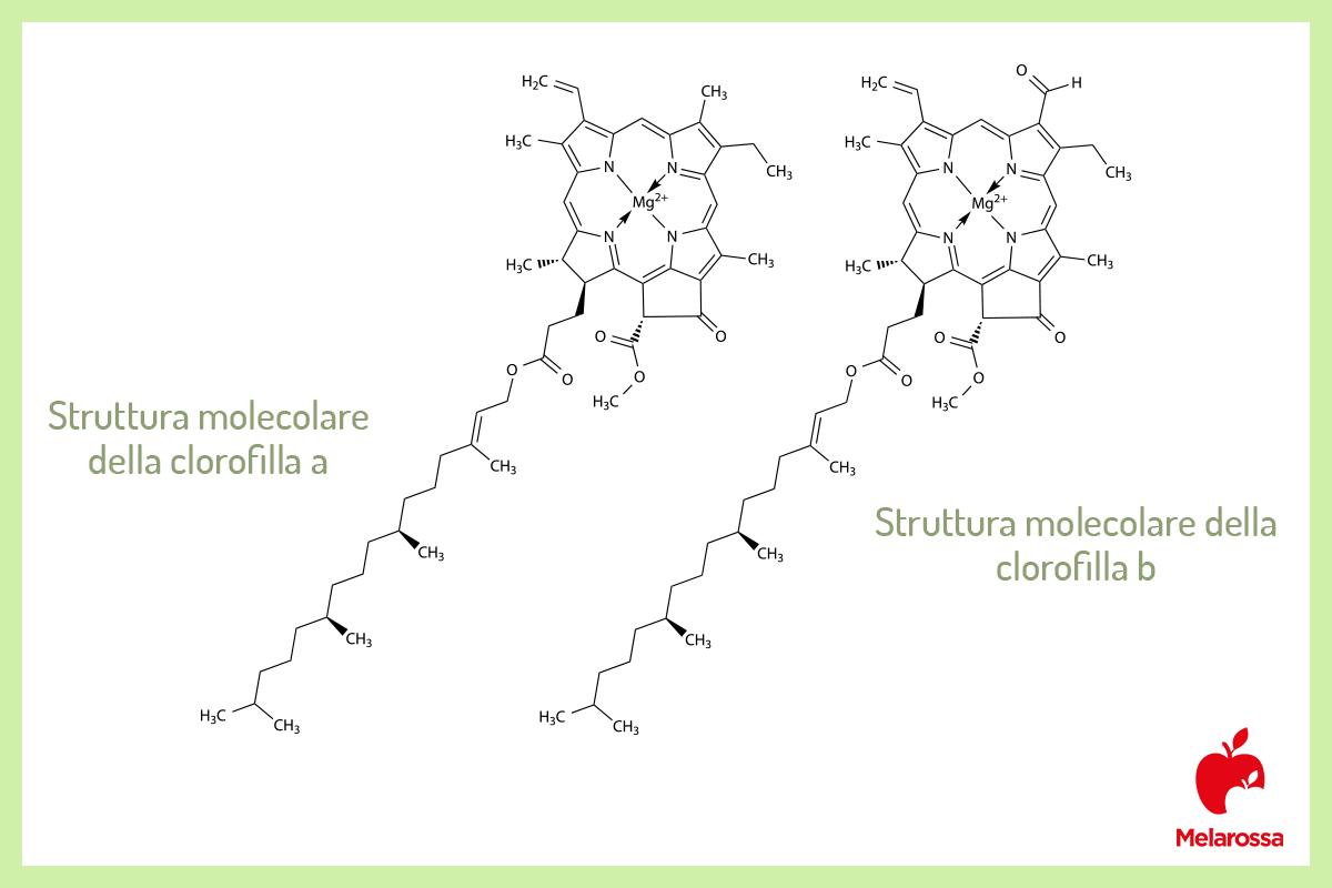 estructura molecular: clorofila