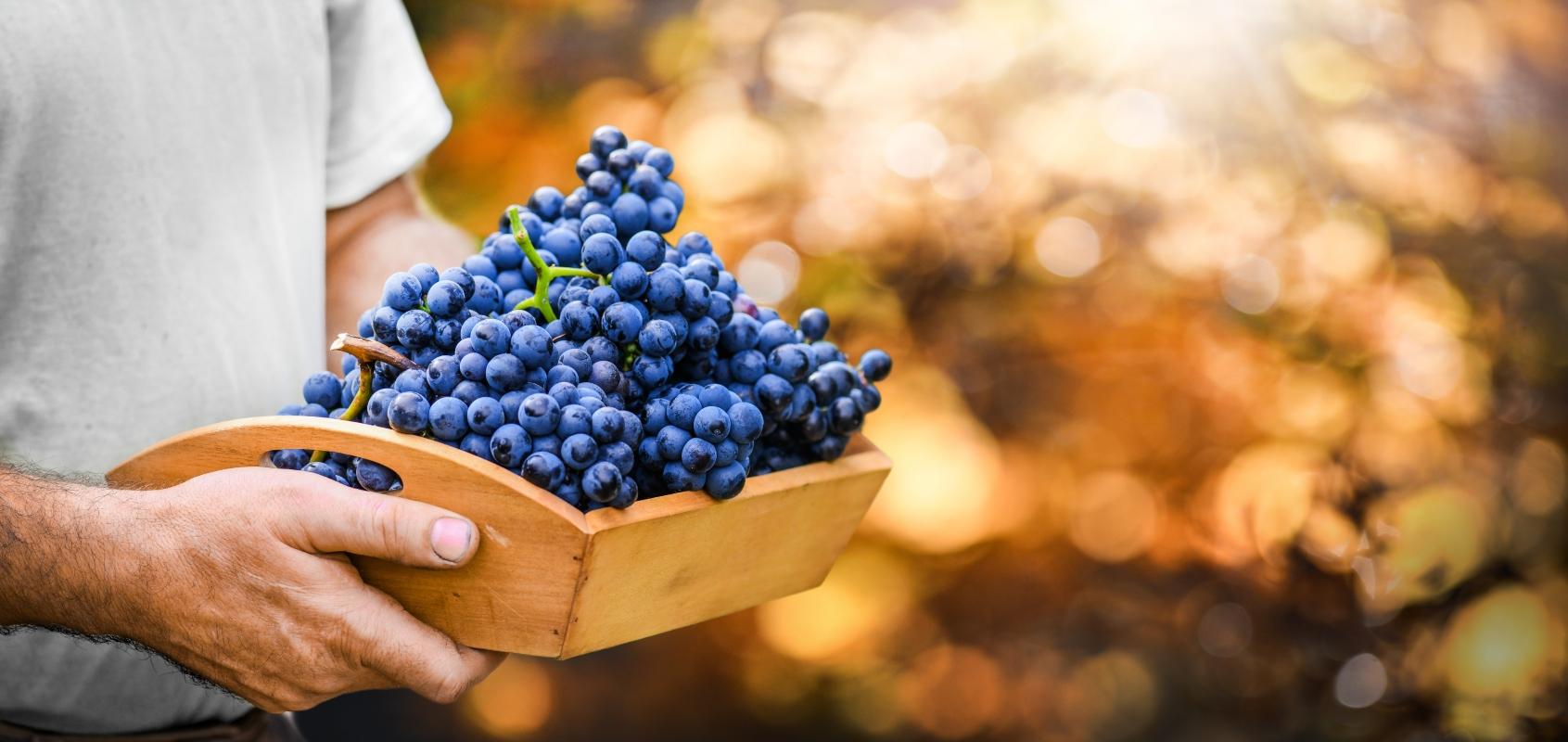 uvas: contraindicaciones